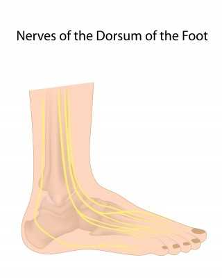 ... digital nerves of foot, commonly affected in diabetic neuropathy